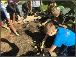 5th graders cook and garden