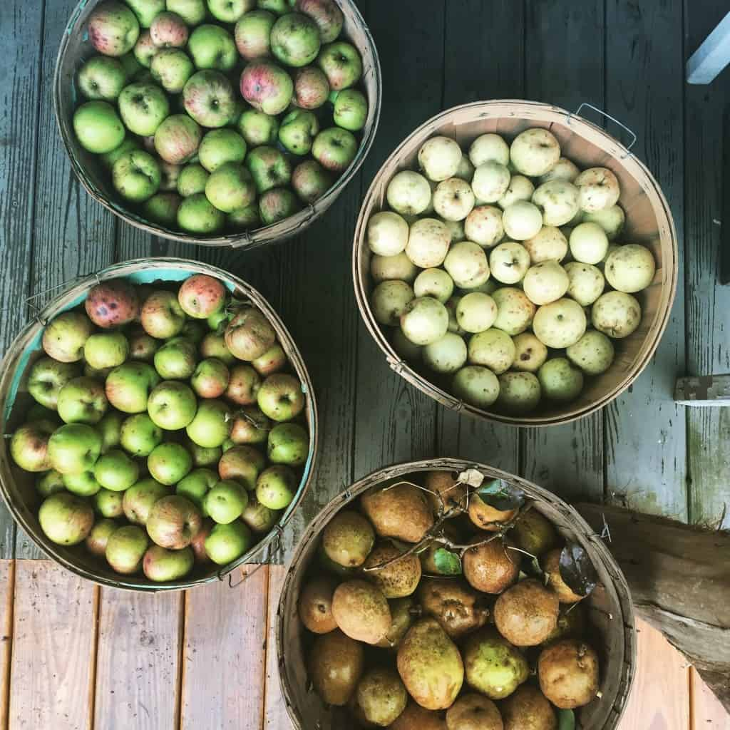 NC Heirloom Apples and Pearsq